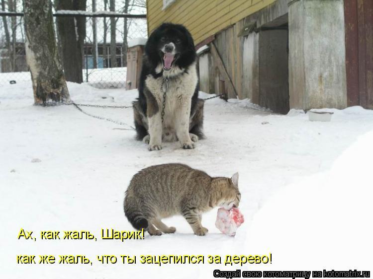 Котоматрица: как же жаль, что ты зацепился за дерево! Ах, как жаль, Шарик!