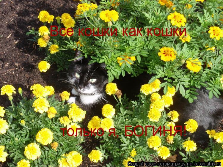 Котоматрица: Все кошки как кошки только я, БОГИНЯ!