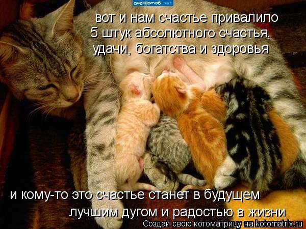 Котоматрица: вот и нам счастье привалило 5 штук абсолютного счастья, удачи, богатства и здоровья лучшим дугом и радостью в жизни и кому-то это счастье ста