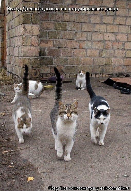 Котоматрица: Выход Дневного дозора на патрулирование двора.