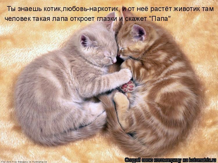 Котоматрица: Ты знаешь котик,любовь-наркотик, и от неё растёт животик там  Ты знаешь котик,любовь-наркотик, и от неё растёт животик там  человек такая лап