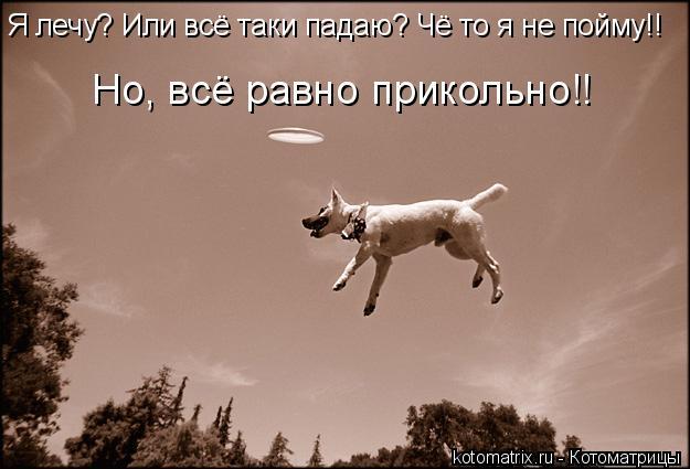 Котоматрица: Я лечу? Или всё таки падаю? Чё то я не пойму!!  Но, всё равно прикольно!!