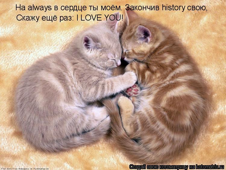 Котоматрица: На always в сердце ты моём. Закончив history свою,  Скажу ещё раз: I LOVE YOU!