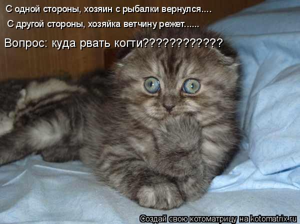 Котоматрица: С одной стороны, хозяин с рыбалки вернулся.... С другой стороны, хозяйка ветчину режет...... Вопрос: куда рвать когти????????????