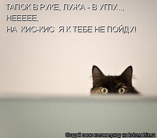 Котоматрица: ТАПОК В РУКЕ, ЛУЖА - В УГЛУ..., НЕЕЕЕЕ,  НА «КИС-КИС» Я К ТЕБЕ НЕ ПОЙДУ!