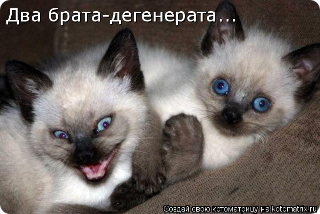 Котоматрица: Два брата-дегенерата...