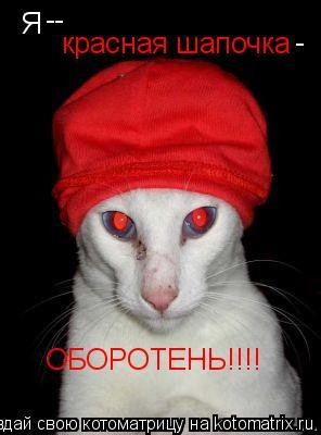 Котоматрица: Я  -- красная шапочка - ОБОРОТЕНЬ!!!!