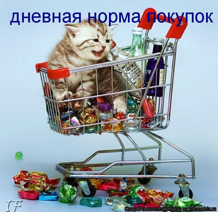 Котоматрица: дневная норма покупок