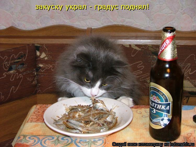 Котоматрица: закуску украл - градус поднял!