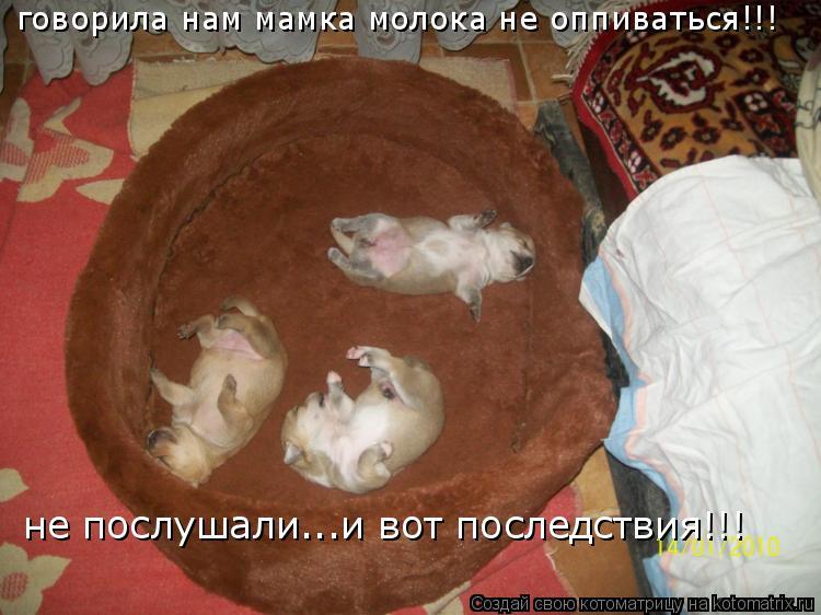 Котоматрица: говорила нам мамка молока не оппиваться!!! не послушали...и вот последствия!!!