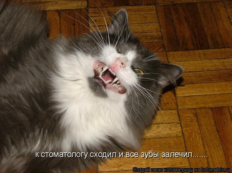 Котоматрица: к стоматологу сходил и все зубы залечил.......