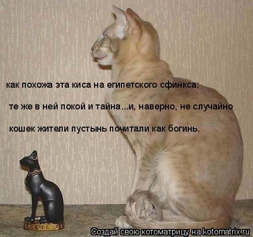 Котоматрица: как похожа эта киса на египетского сфинкса: те же в ней покой и тайна...и, наверно, не случайно кошек жители пустынь почитали как богинь.