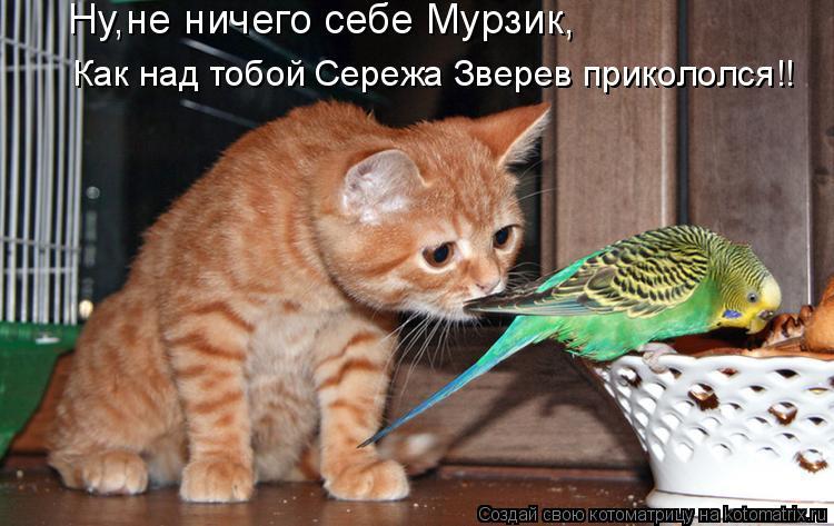 Котоматрица: Ну,не ничего себе Мурзик,   Как над тобой Сережа Зверев прикололся!!