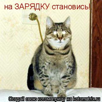 Котоматрица: на ЗАРЯДКУ становись!