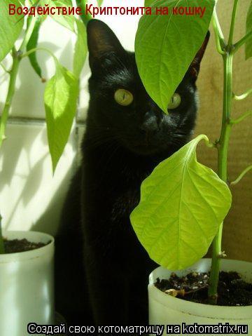 Котоматрица: Воздействие Криптонита на кошку