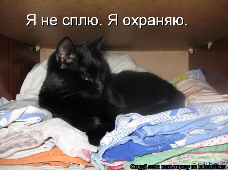 Котоматрица: Я не сплю. Я охраняю.