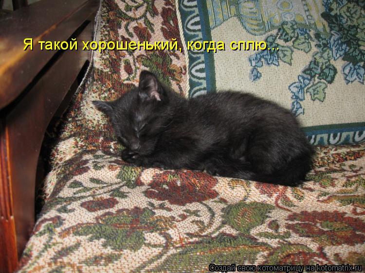 Котоматрица: Я такой хорошенький, когда сплю...