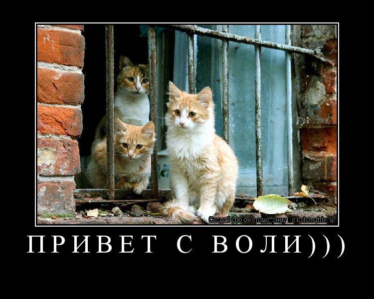 Котоматрица: ПРИВЕТ С ВОЛИ)))