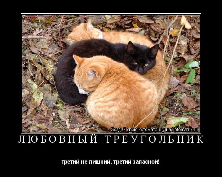 Котоматрица: Любовный треугольник третий не лишний, третий запасной!