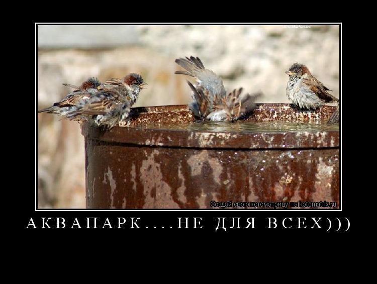Котоматрица: аквапарк....не для всех)))