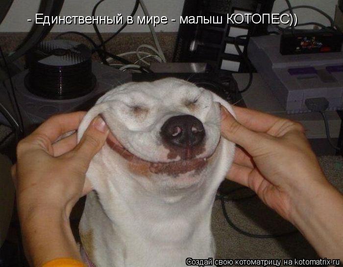 Котоматрица: - Единственный в мире - малыш КОТОПЕС))