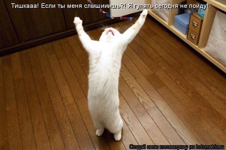 Котоматрица: Тишкааа! Если ты меня слышииишь?! Я гулять сегодня не пойду!