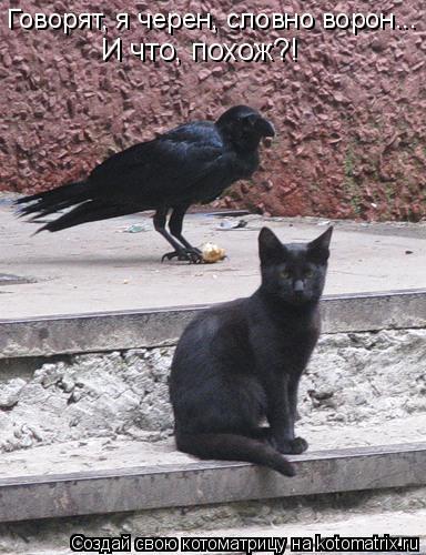 Котоматрица: Говорят, я черен, словно ворон... И что, похож?!