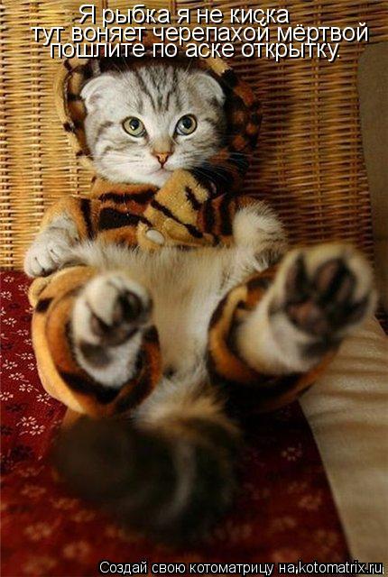 Котоматрица: Я тигрёнок а не киск Я рыбка я не киска тут воняет черепахой мёртвой пошлите по аске открытку.