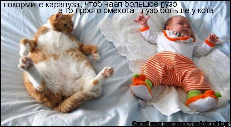 Котоматрица: покормите карапуза , чтоб наел большое пузо а то просто смехота - пузо больше у кота!..