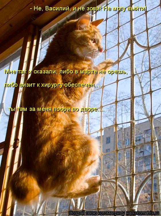 Котоматрица: - Не, Василий, и не зови! Не могу выйти! Мне так и сказали, либо в марте не орешь, либо визит к хирургу обеспечен.... ты там за меня поори во дворе.