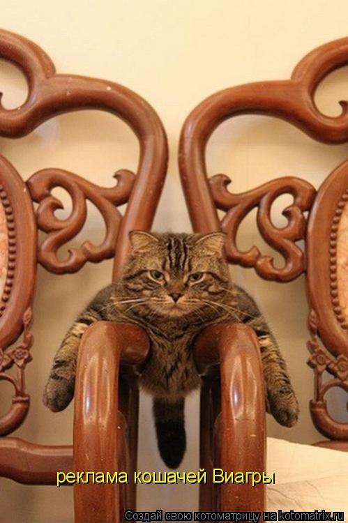 Котоматрица: реклама кошачей Виагры