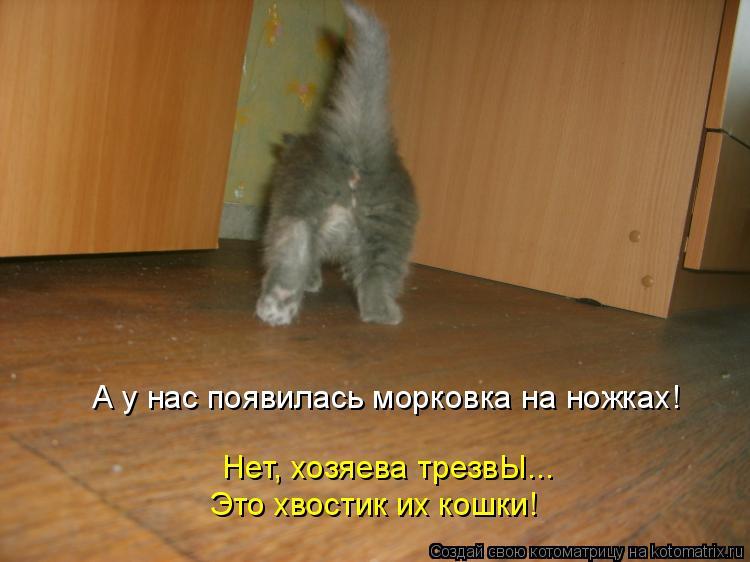 Котоматрица: А у нас появилась морковка на ножках! Нет, хозяева трезвЫ... Это хвостик их кошки!