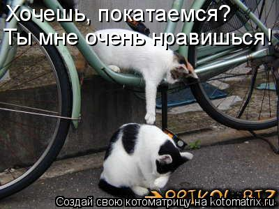 Котоматрица: Хочешь, покатаемся? Ты мне очень нравишься!