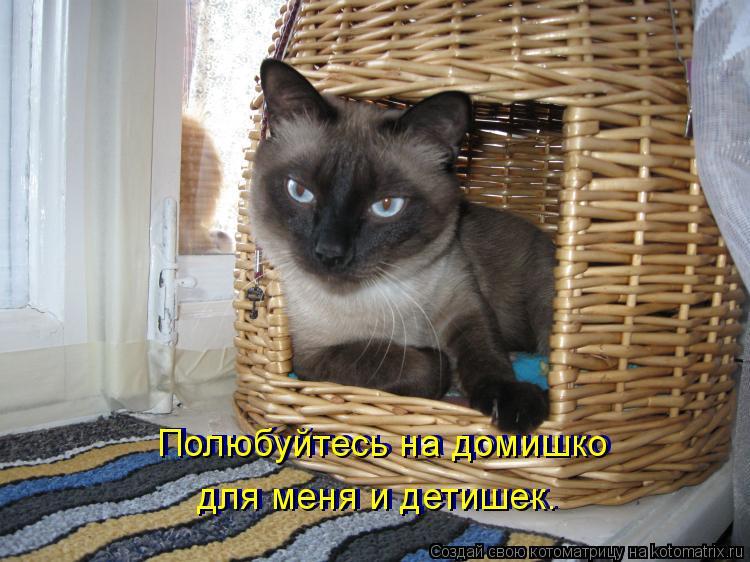 Котоматрица: Полюбуйтесь на домишко для меня и детишек. Полюбуйтесь на домишко для меня и детишек.
