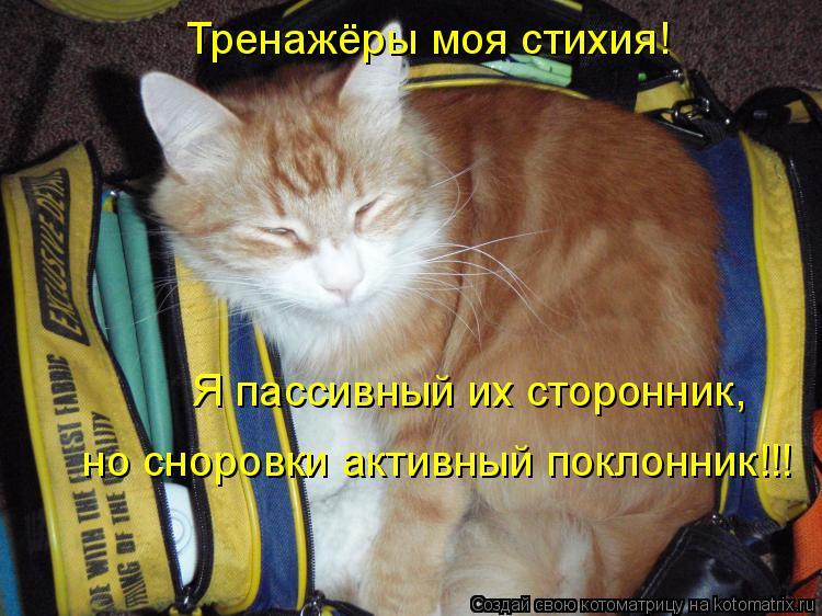 Котоматрица: Тренажёры моя стихия! Я пассивный их сторонник, но сноровки активный поклонник!!!