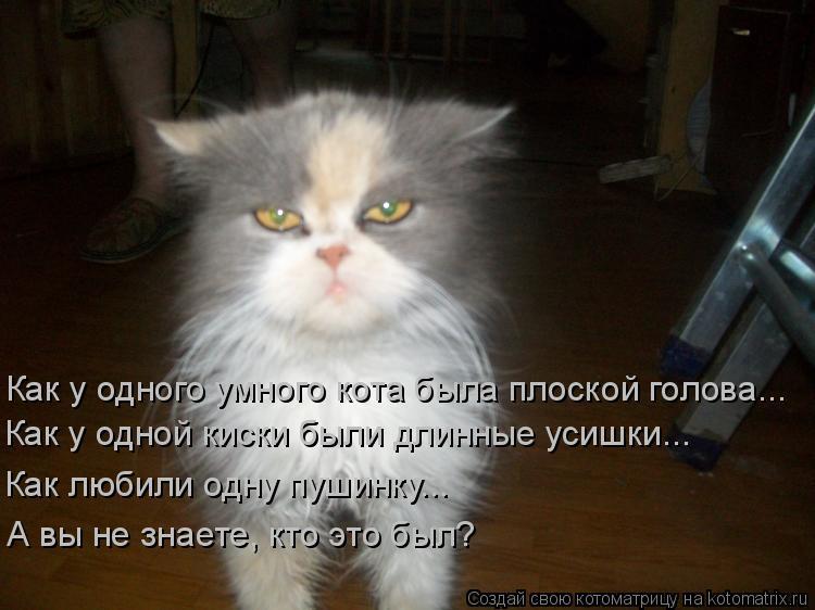 Котоматрица: Как у одного умного кота была плоской голова... Как у одной киски были длинные усишки... Как любили одну пушинку... А вы не знаете, кто это был?
