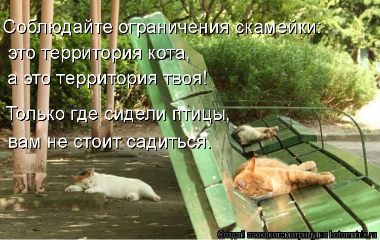 Котоматрица: Соблюдайте ограничения скамейки: это территория кота,  а это территория твоя! Только где сидели птицы, вам не стоит садиться.