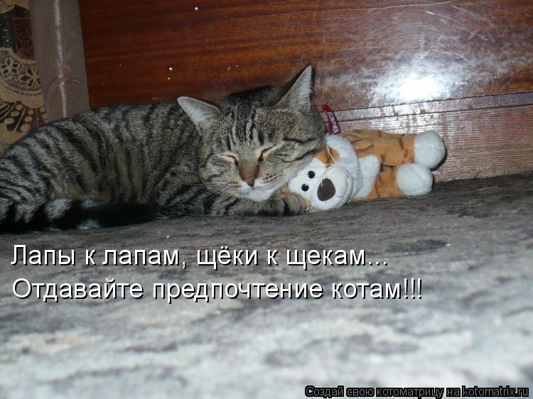 Котоматрица: Лапы к лапам, щёки к щекам... Отдавайте предпочтение котам!!!