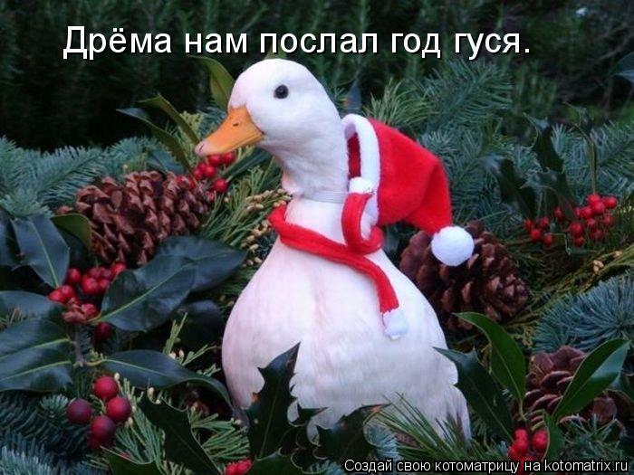 Котоматрица: Дрёма нам послал год гуся.