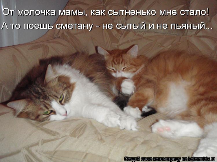 Котоматрица: От молочка мамы, как сытненько мне стало! А то поешь сметану - не сытый и не пьяный...