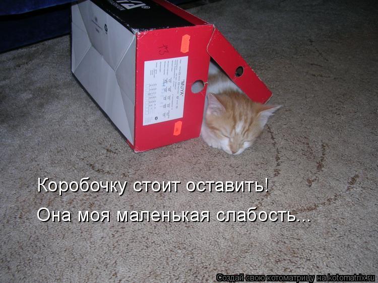 Котоматрица: Коробочку стоит оставить! Она моя маленькая слабость...