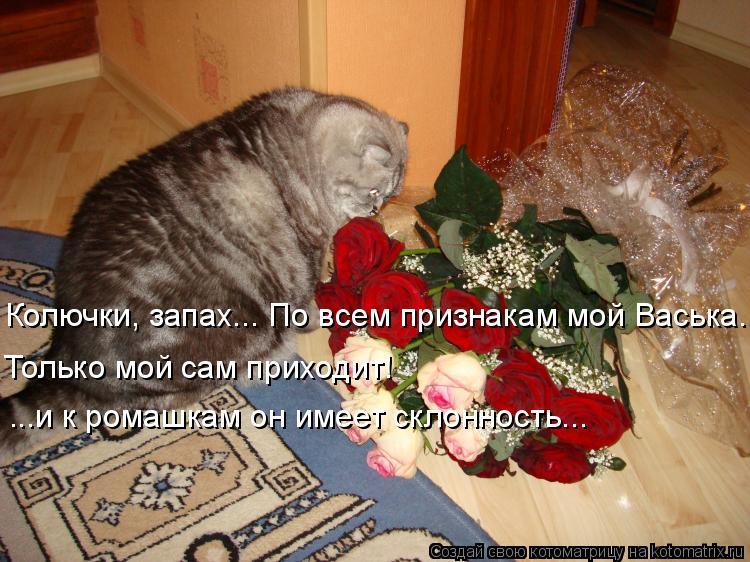 Котоматрица: Колючки, запах... По всем признакам мой Васька. Только мой сам приходит! ...и к ромашкам он имеет склонность...