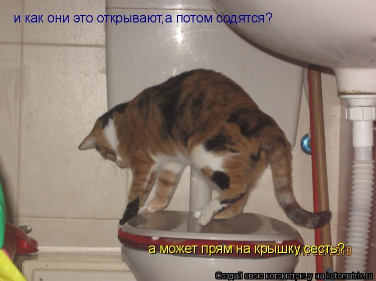 Котоматрица: и как они это открывают,а потом содятся? а может прям на крышку сесть?