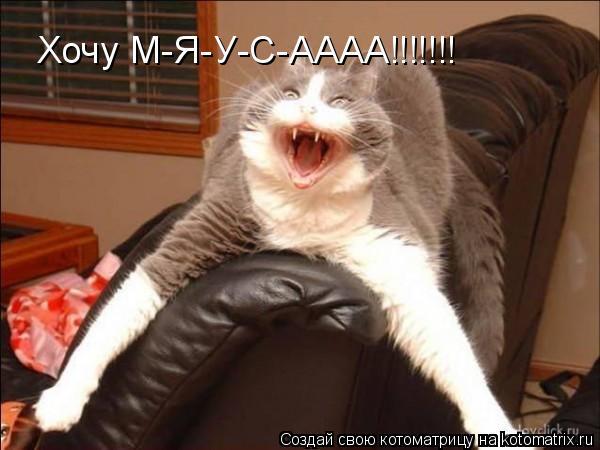 Котоматрица: Хочу М-Я-У-С-АААА!!!!!!!