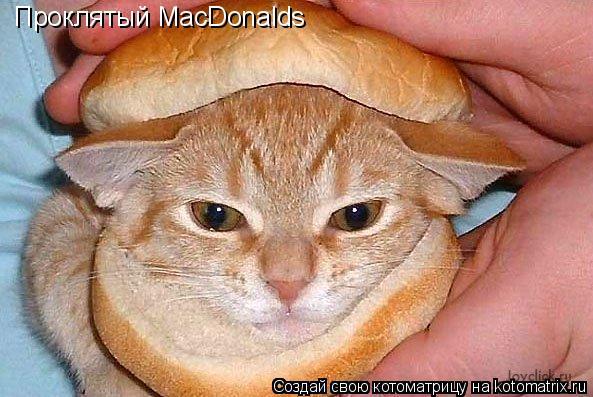 Котоматрица: Проклятый MacDonalds