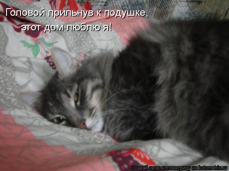 Котоматрица: Головой прильнув к подушке,  этот дом люблю я!