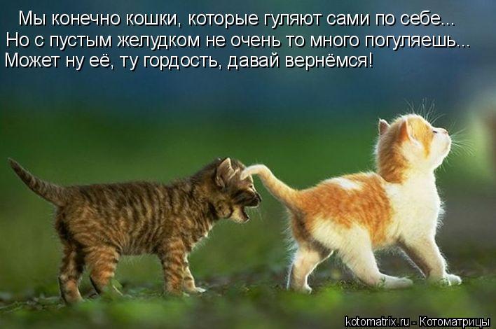 Котоматрица: Мы конечно кошки, которые гуляют сами по себе... Но с пустым желудком не очень то много погуляешь... Может ну её, ту гордость, давай вернёмся!