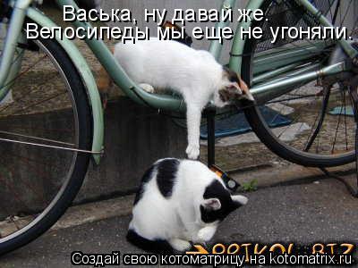 Котоматрица: Велосипеды мы еще не угоняли. Васька, ну давай же.