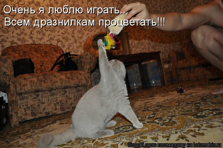 Котоматрица: Очень я люблю играть... Всем дразнилкам процветать!!!