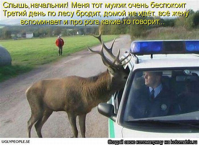 Котоматрица: Слышь,начальник! Меня тот мужик очень беспокоит Третий день по лесу бродит, домой не идёт, всё жену  вспоминает и про рога какие-то говорит...